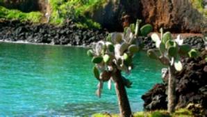 Tortoises in Galápagos