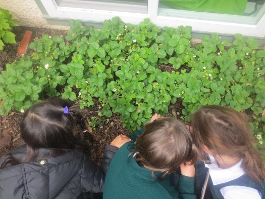 Is that a bee in the strawberry patch?